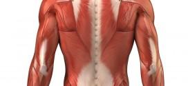 muscoli-lombari
