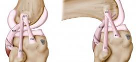 tendine-rotuleo